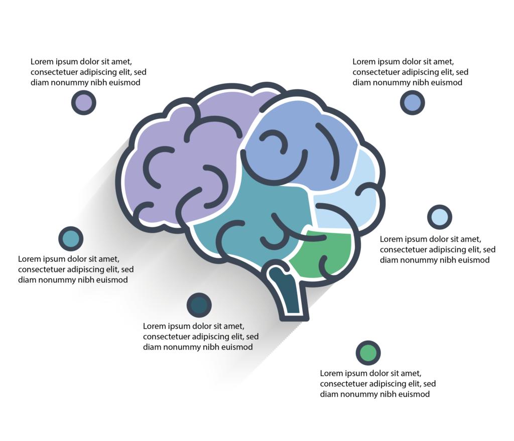 Brain Infographic, BidsandBeyond