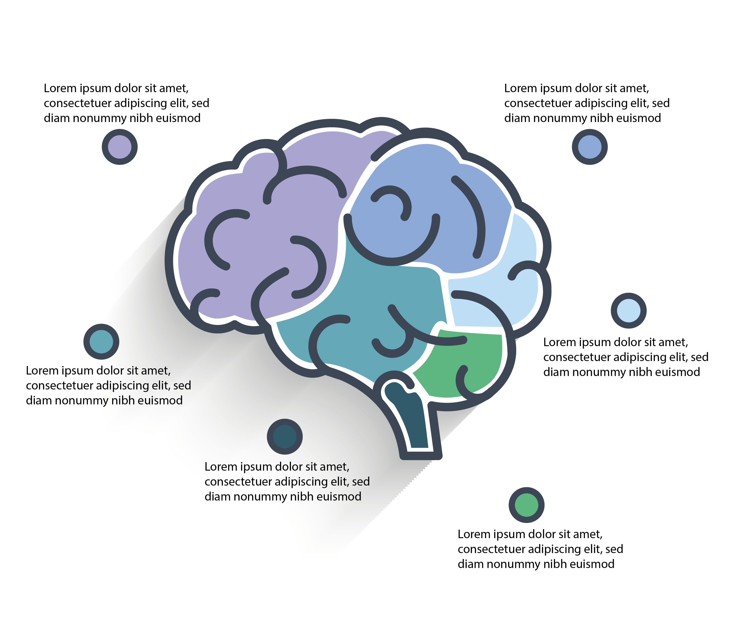 Brain Infographic, Bids and Beyond