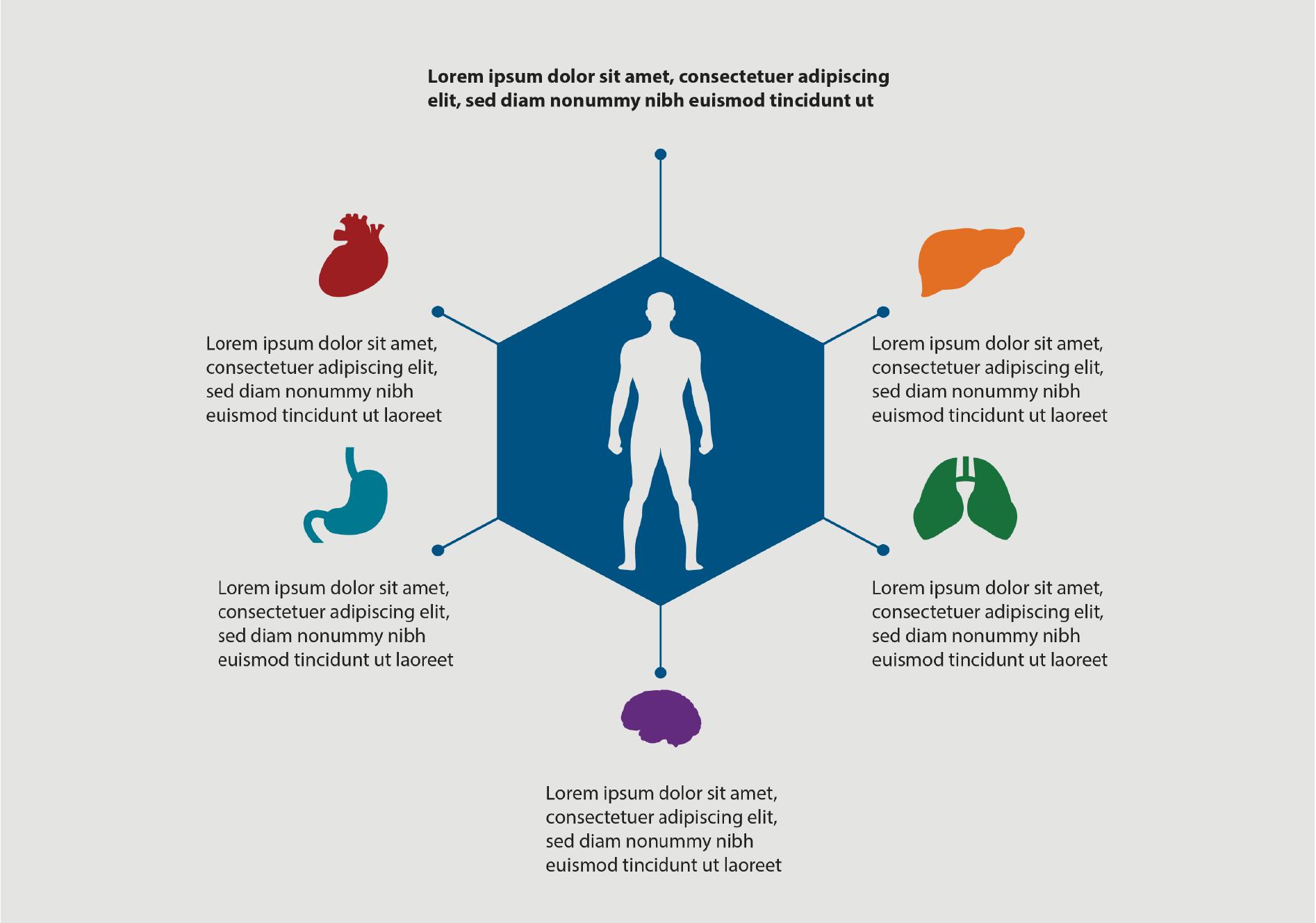 Organs Info-Graphic, BidsandBeyond